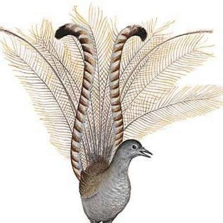 Logo Sandwicherie L'Oiseau-Lyre Auderghem